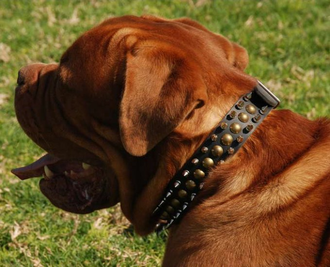 French Mastiff Leather Spiked and Studded Dog Colla - 3 Rows