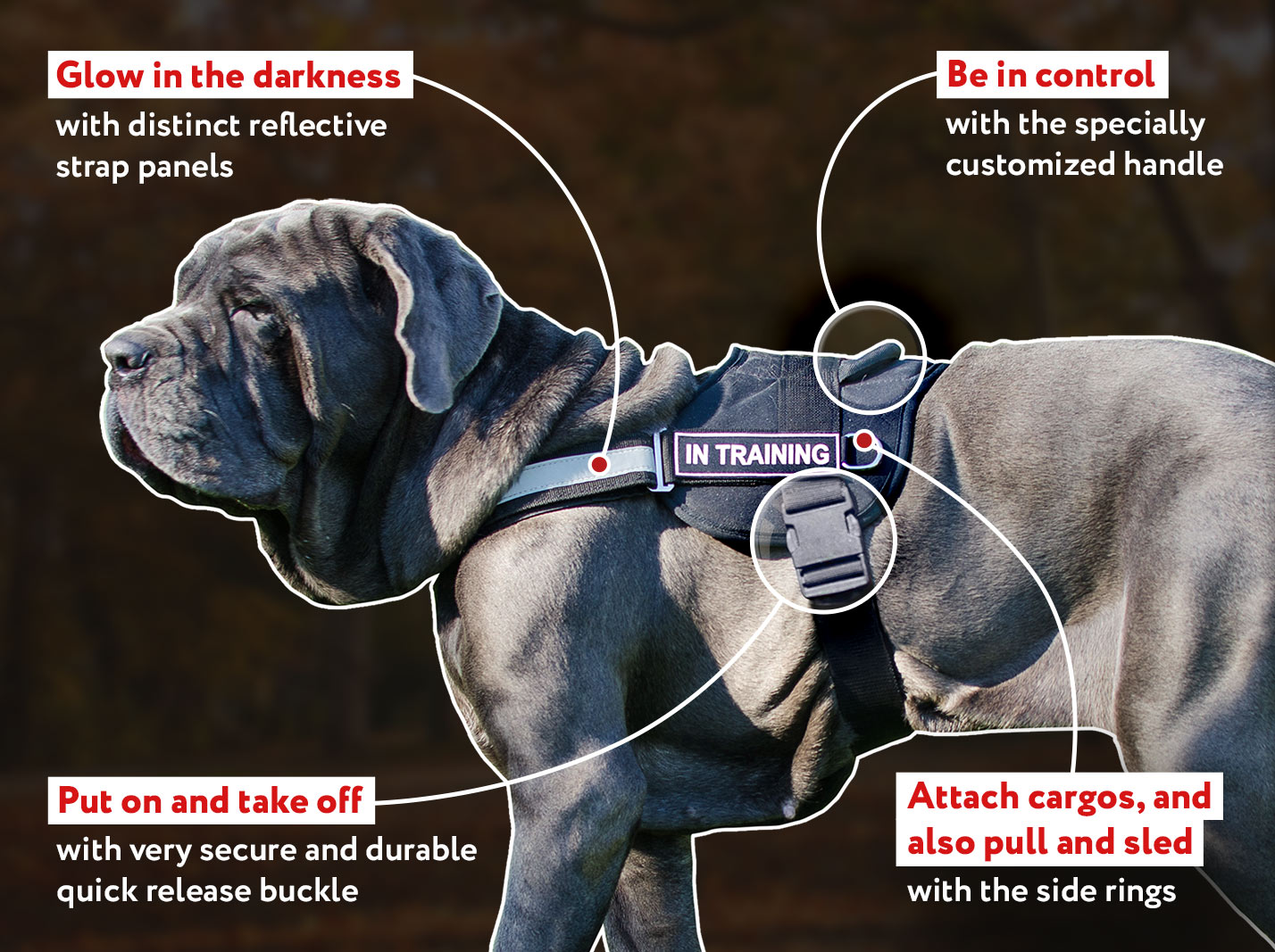 Comfort Control Dog Harness for Mastiff
