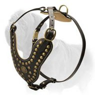 Royal Mastiff Harness with Brass Studs and Nappa Leather Padding