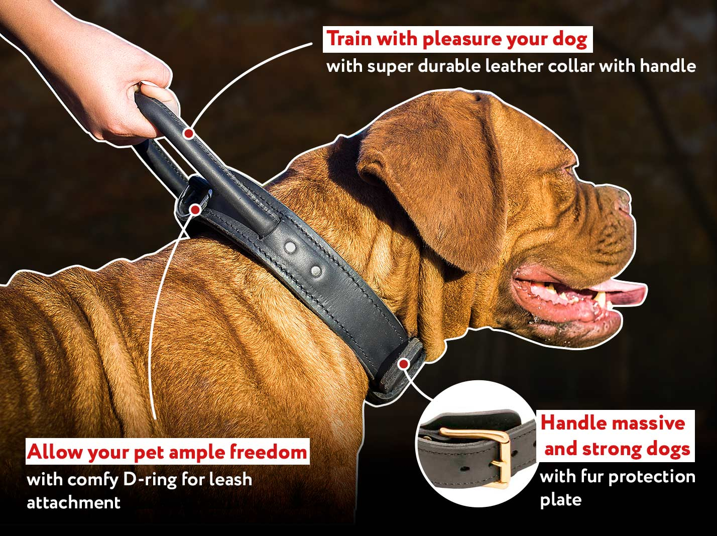 Incredibly Durable Mastiff Dog Collar with Handle