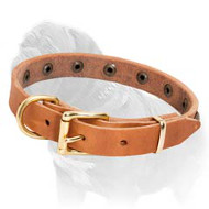 Leather Dog Collar with Brass Half-Ball Studs for Mastiff Puppies and Small Breed Dogs