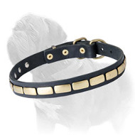 Mastiff Leather Collar with Brass Plates for Fashionable Walking