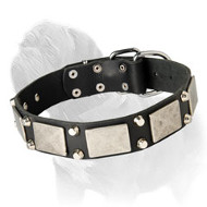 Leather Dog Collar with Nickel Plate and Pyramids for Mastiff Walking
