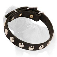 Decorative Leather Dog Collar with Nickel Studs for Walking Mastiffs, Puppies and Small Breed Dogs