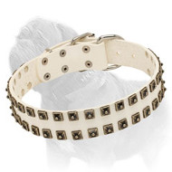White Leather Dog Collar with Caterpillar Studs for Mastiff Walking