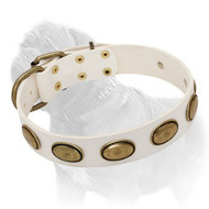 White Leather Collar with Vintage Goldish Ovals for Mastiff Walking