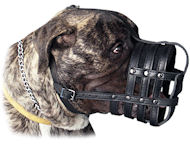 Leather Basket Dog Muzzle for my Mastiff