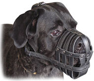 Every Day Leather Large Dog Muzzle for Cane Corso