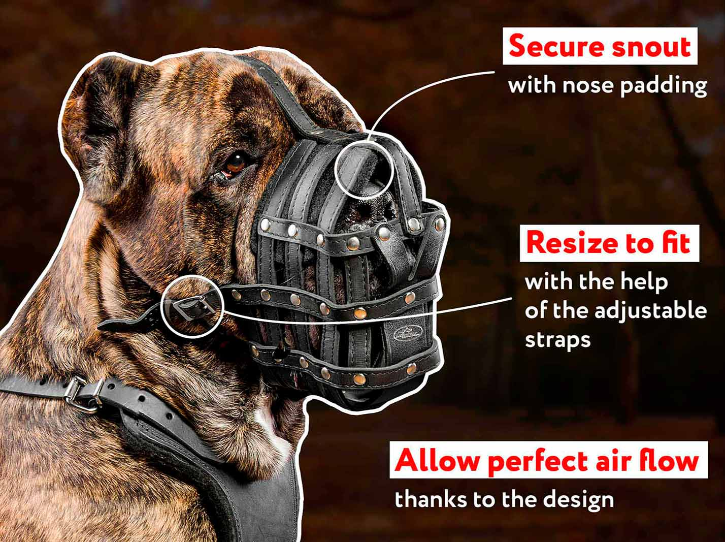 Cane Corso Mastiff Ventilation leather dog muzzle