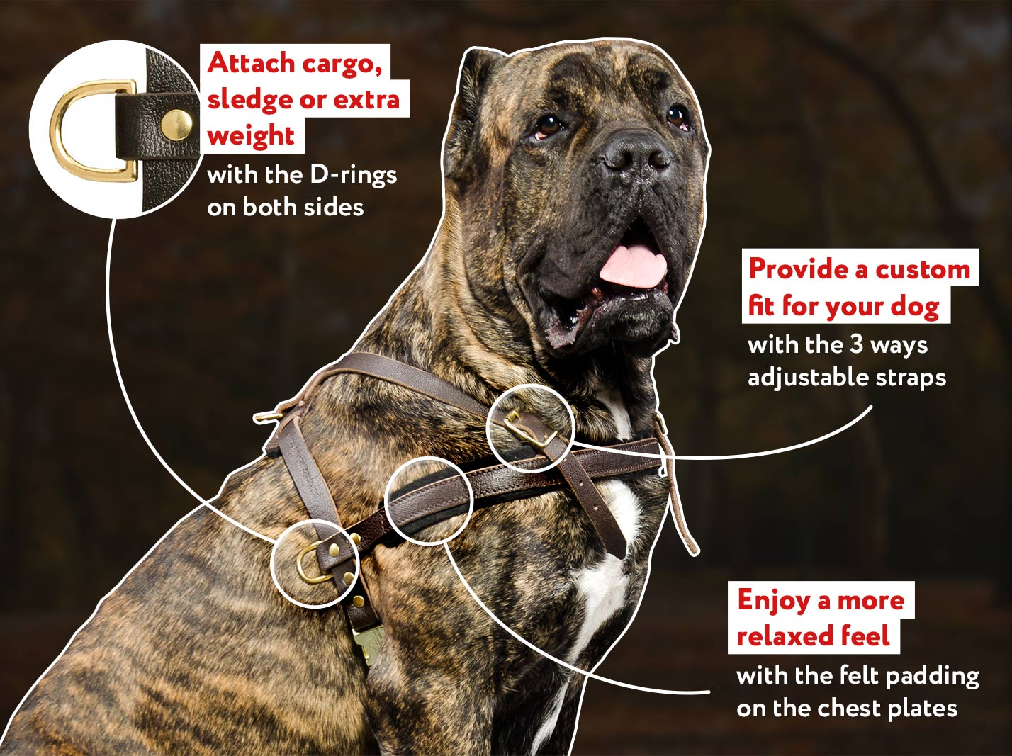 Tracking/PullingLeather Dog Harness For Cane Corso Mastiff