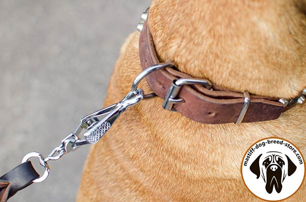 Embellished leather dog collar for Bullmastiff with nickel plated fittings