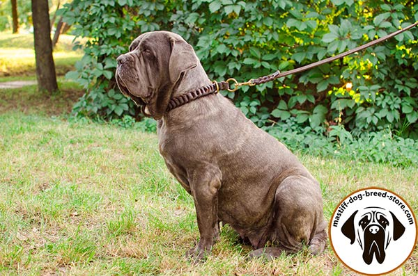 Dog-safe braided leather Mastino Napoletano collar