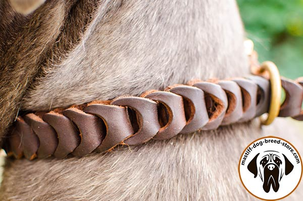 Eye-catchy braided leather choke collar for Mastino Napoletano - close-up