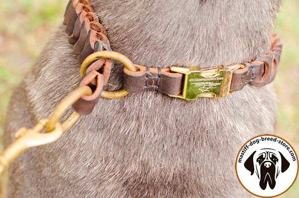 Extraordinary braided leather choke collar for Mastino Napoletano with quick release buckle