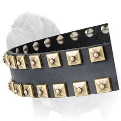 Gold Color Studs Decorate Leather Collar