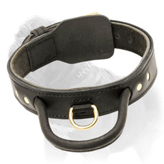 Mastiff dog collar with solid brass hardware