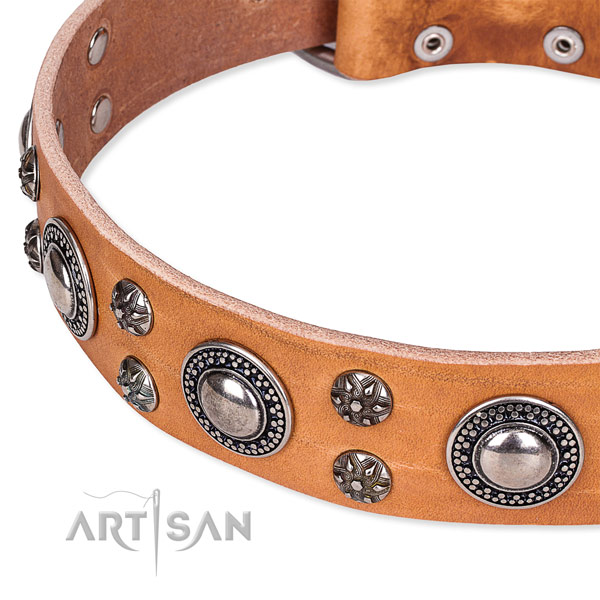 Everyday walking full grain natural leather collar with durable buckle and D-ring