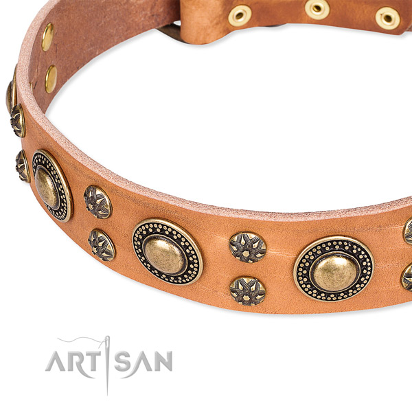 Leather dog collar with trendy adornments