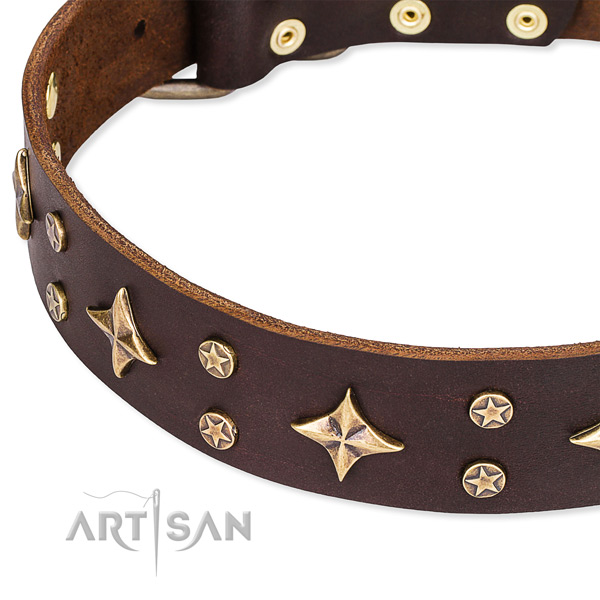 Full grain leather dog collar with stunning adornments
