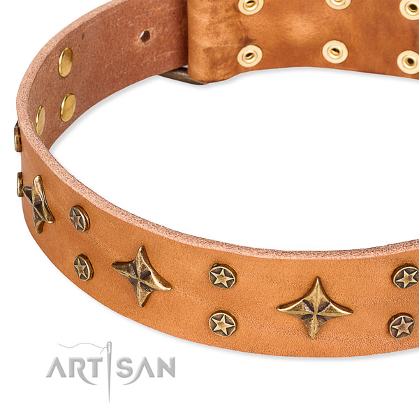 Full grain genuine leather dog collar with amazing studs