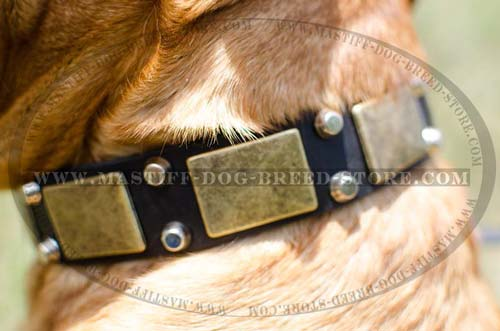 Dogue De Bordeaux Leather Collar with Studs
