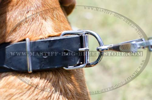 High Quality leather Collar with Strong Ring