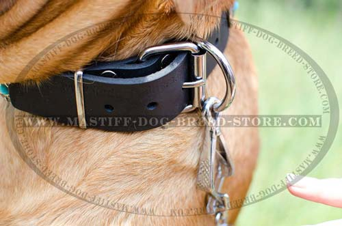 French Mastiff Dog Collar with Strong and Reliable Ring