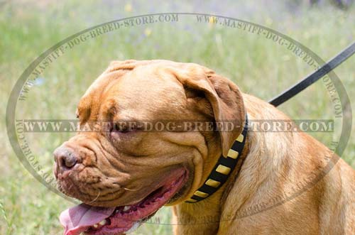 Mastiff Leather Collar for Walking Dogue de Bordeaux