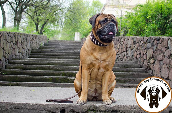 Comfy-to-wear wide leather Bullmastiff collar