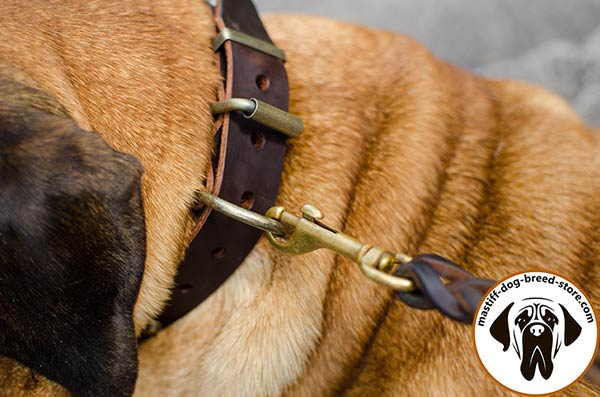 Super durable leather Bullmastiff collar with brass plated hardware