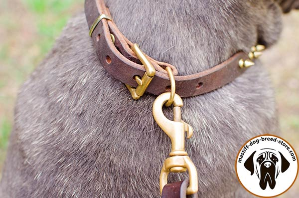 Up-to-trend leather Mastino Napoletano collar with brass fittings