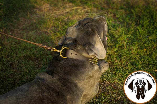Eye-catchy leather Mastino Napoletano collar with brass plated hardware