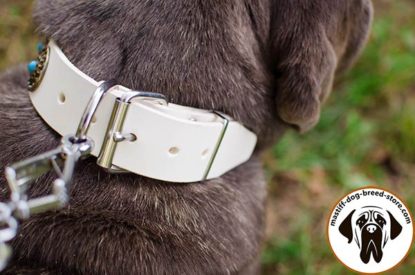 Handmade leather Mastino Napoletano collar with durable buckle