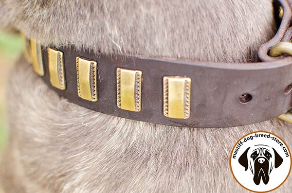 Leather Mastino Napoletano collar with gold-like plates - close-up