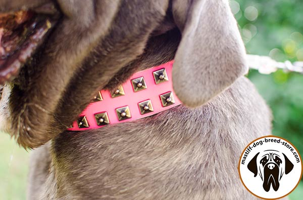 Leather Mastino Napoletano collar with 2 rows of studs