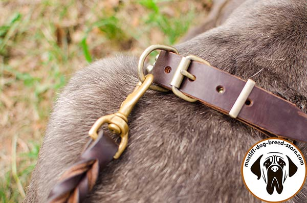 Excellent leather Mastino Napoletano collar with brass buckle and D-ring