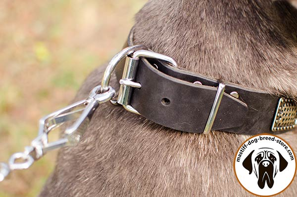 Hand-decorated leather Mastino Napoletano collar  with nickel plated fittings