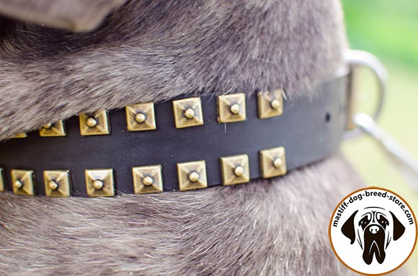 Extraordinary leather Mastino Napoletano collar with square old-looking studs