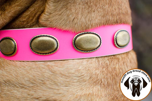 Fashion leather canine collar for Bullmastiff with massive brass plates - close-up