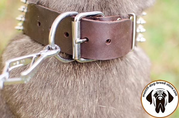 Leather canine collar for Mastino Napoletano with sturdy buckle and D-ring