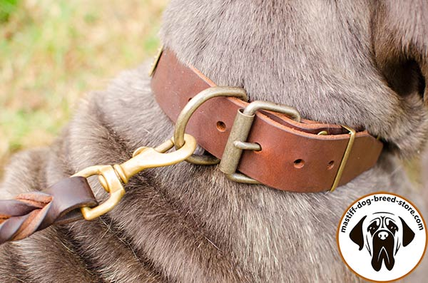 Adjustable leather canine collar for Mastino Napoletano