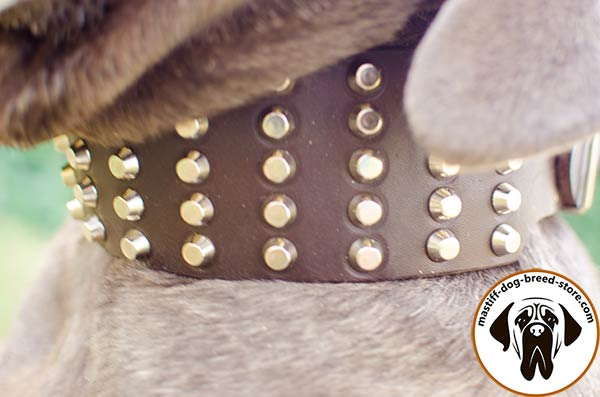 Leather canine collar for Mastino Napoletano with handset pyramids