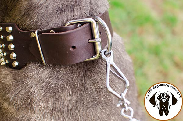 Leather canine collar for Mastino Napoletano with strong buckle and D-ring