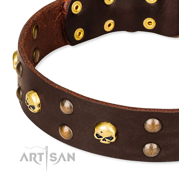 Daily leather dog collar for walking