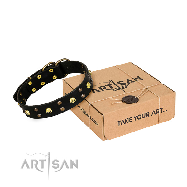 Day-to-day leather dog collar with astounding adornments