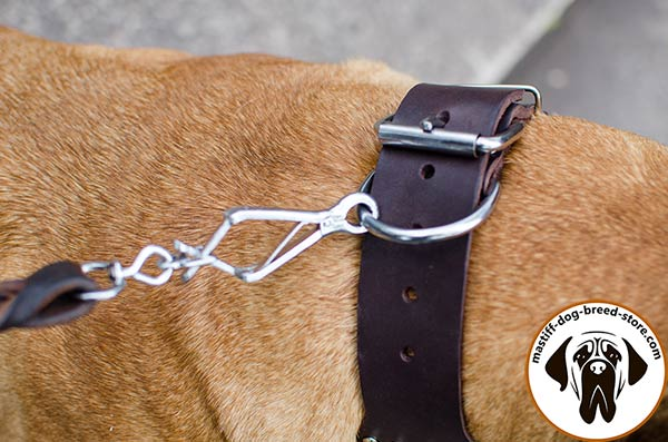 Reliable leather dog collar for Bullmastiff with durable hardware