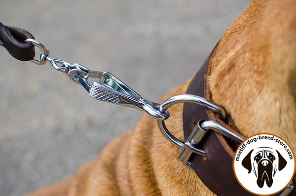 Super strong leather dog collar for Bullmastiff with reliable hardware
