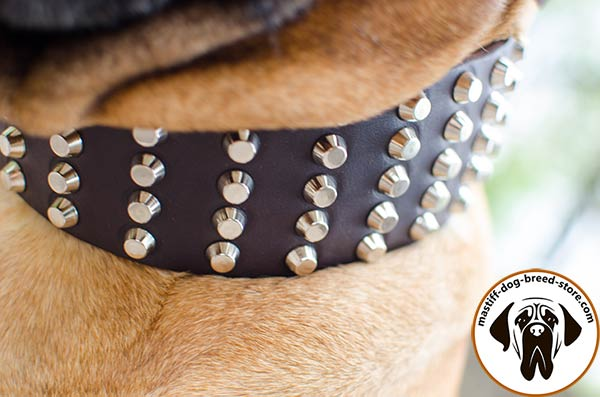 Studded leather dog collar for Bullmastiff - close-up