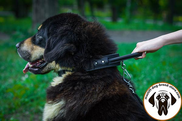 Comfy-to-adjust leather dog collar for Mastiff