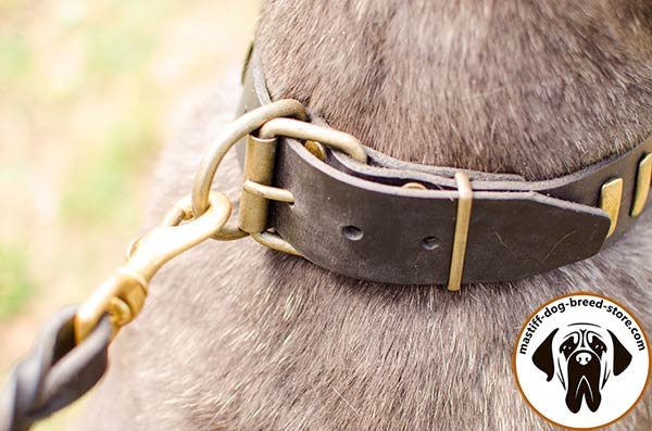 Designer leather dog collar for Mastino Napoletano with strong brass buckle